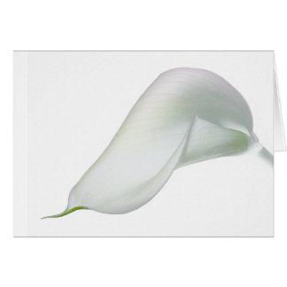 Carte de fleur de zantedeschia