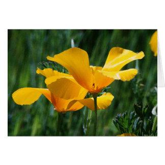 Carte de fleurs de pavots de Californie