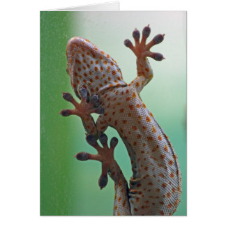Carte de Gecko