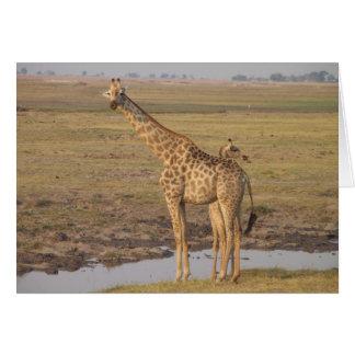 Carte de girafe