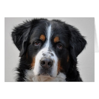 Carte de joyeux anniversaire de photo de chien de