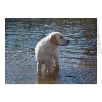 Carte de labrador retriever au lac