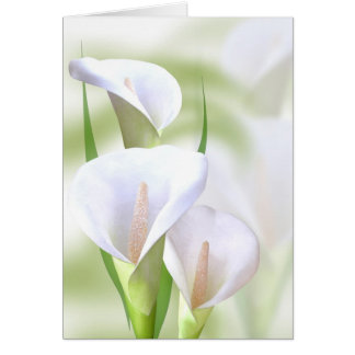 Carte de Lilly de calla
