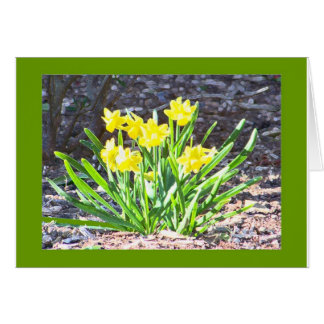 Carte de mini-Jonquilles