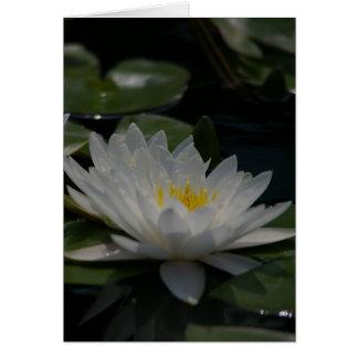 Carte de nénuphar de Lotus blanc