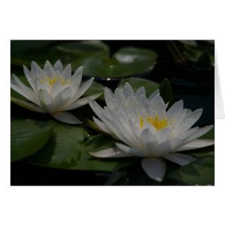 Carte de nénuphars de Lotus blanc