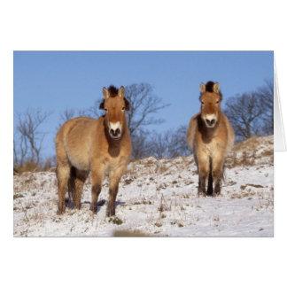 Carte de Noël - cheval 2 de Przewalski