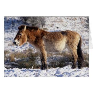 Carte de Noël - cheval 6 de Przewalski