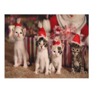 Carte de Noël de 4 chatons