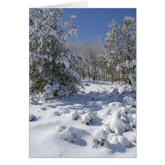 Carte de Noël de beauté de forêt du Colorado