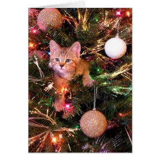 Carte de Noël de chaton de Bob de lutin