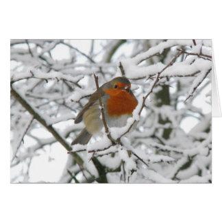 Carte de Noël de luxe de Robin d'hiver