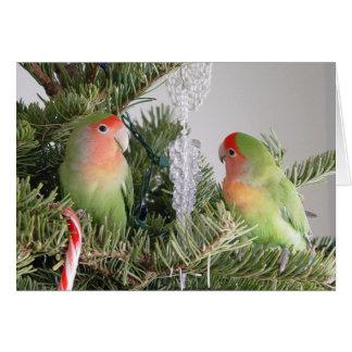 Carte de Noël de perruche