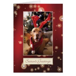 Carte de Noël de Vizsla de Hongrois 008