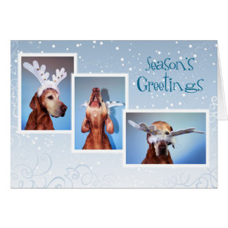 Carte de Noël de Vizsla de Hongrois 011