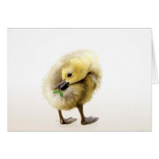 Carte de Noël d'oie de bébé de houx