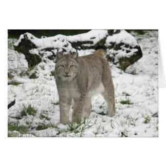Carte de Noël - lynx sibérien