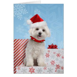 Carte de Noël maltaise de chiot