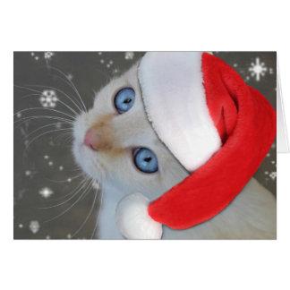 Carte de Noël observée par bleu de chaton