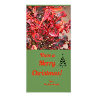 Carte de Noël rouge de plante