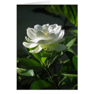 Carte de note blanche de fleur de gardénia