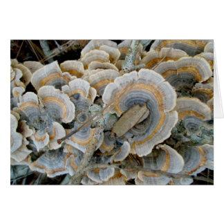 Carte de note colorée du champignon d'étagère OBX