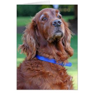 Carte de note de blanc de photo de chien de poseur