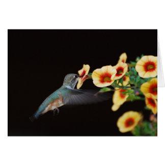 Carte de note de colibri (blanc)
