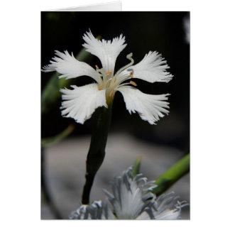 carte de note de fleur blanche
