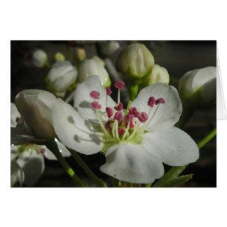 Carte de note de fleur de poire d'aquarelle