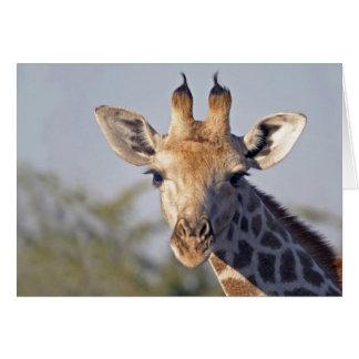 Carte de note de Madame Giraffe