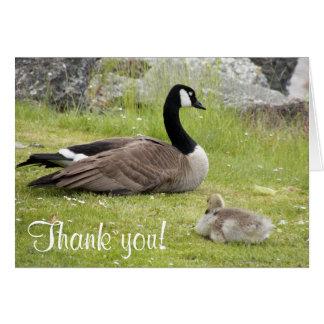 Carte de note de Merci de photo d'oie de bébé