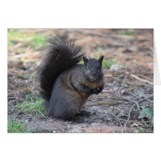 Carte de note d'écureuil noir
