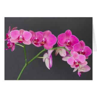 Carte de note, jet magenta d'orchidée de mite des