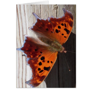 Carte de note orange de papillon