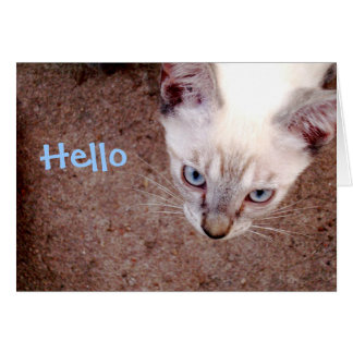 "Carte de note siamoise de chaton ""bonjour """
