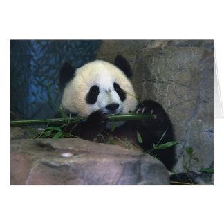 Carte de panda