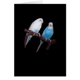 Carte de perruche d'Ariel et d'oscar