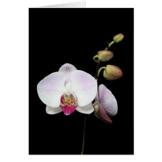 """Carte de """"Phalaenopsis"""""""