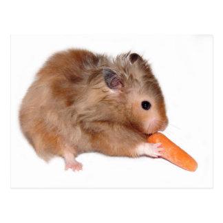 Carte de régime de hamster