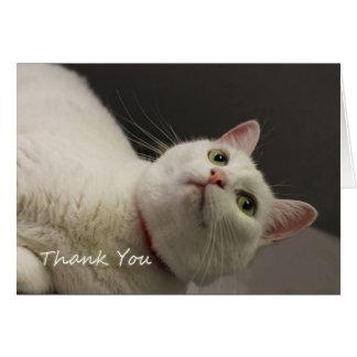 Carte de remerciements blanc de chat par le foyer