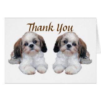 Carte de remerciements de chiots de Shih Tzu