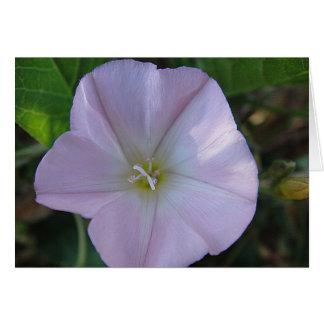 Carte de salutation lilas floraison, en blanc, ges