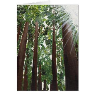 "Carte ""de séquoias de Californie"" de justice de"