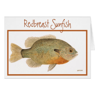 Carte de Sunfish de rouge-gorge