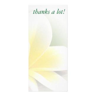 carte de support - photo sensible de frangipani
