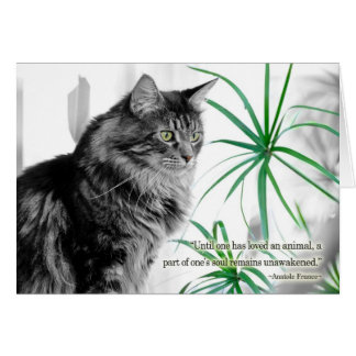 Carte de sympathie d'animal familier pour le chat