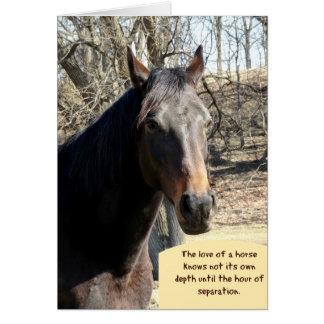 Carte de sympathie de cheval avec la citation