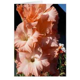 Carte de sympathie de Gladiola de Carol
