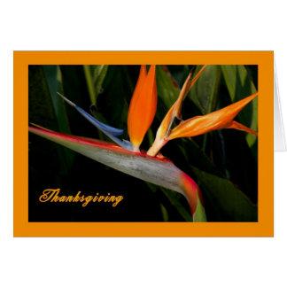 Carte de thanksgiving avec l'oiseau du paradis